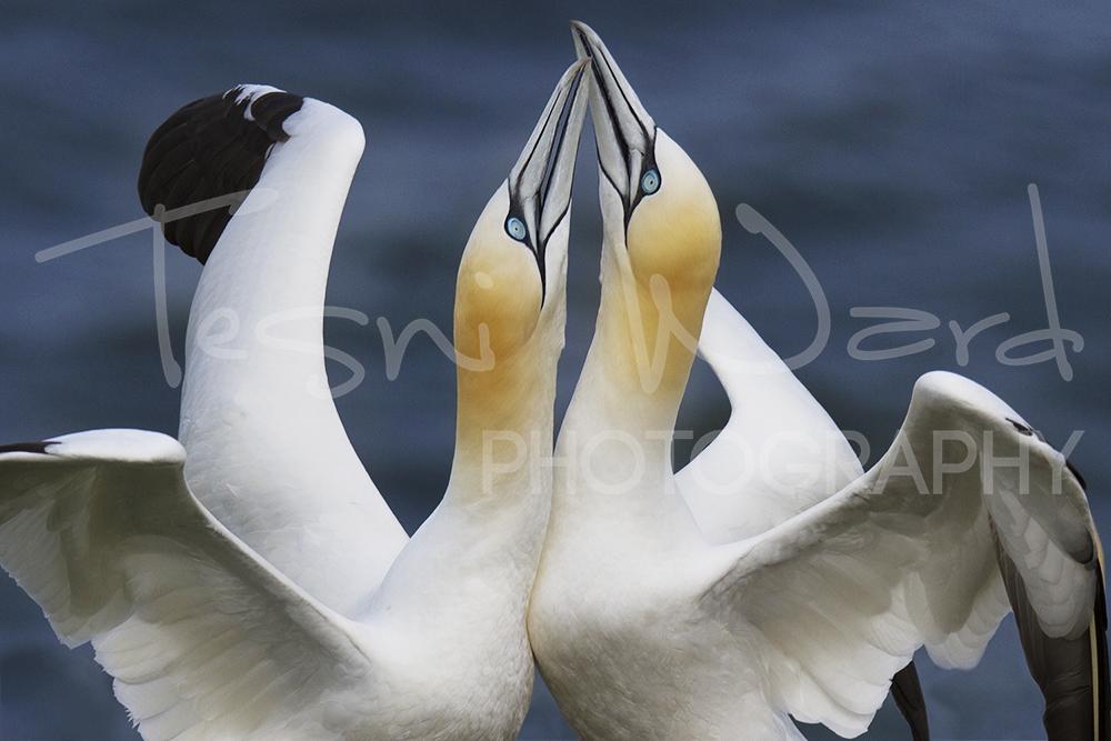 Coastal Bird Photography Workshops
