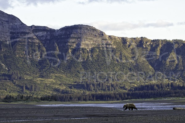 Katmai Hallo Bay Grizzly Bear Country
