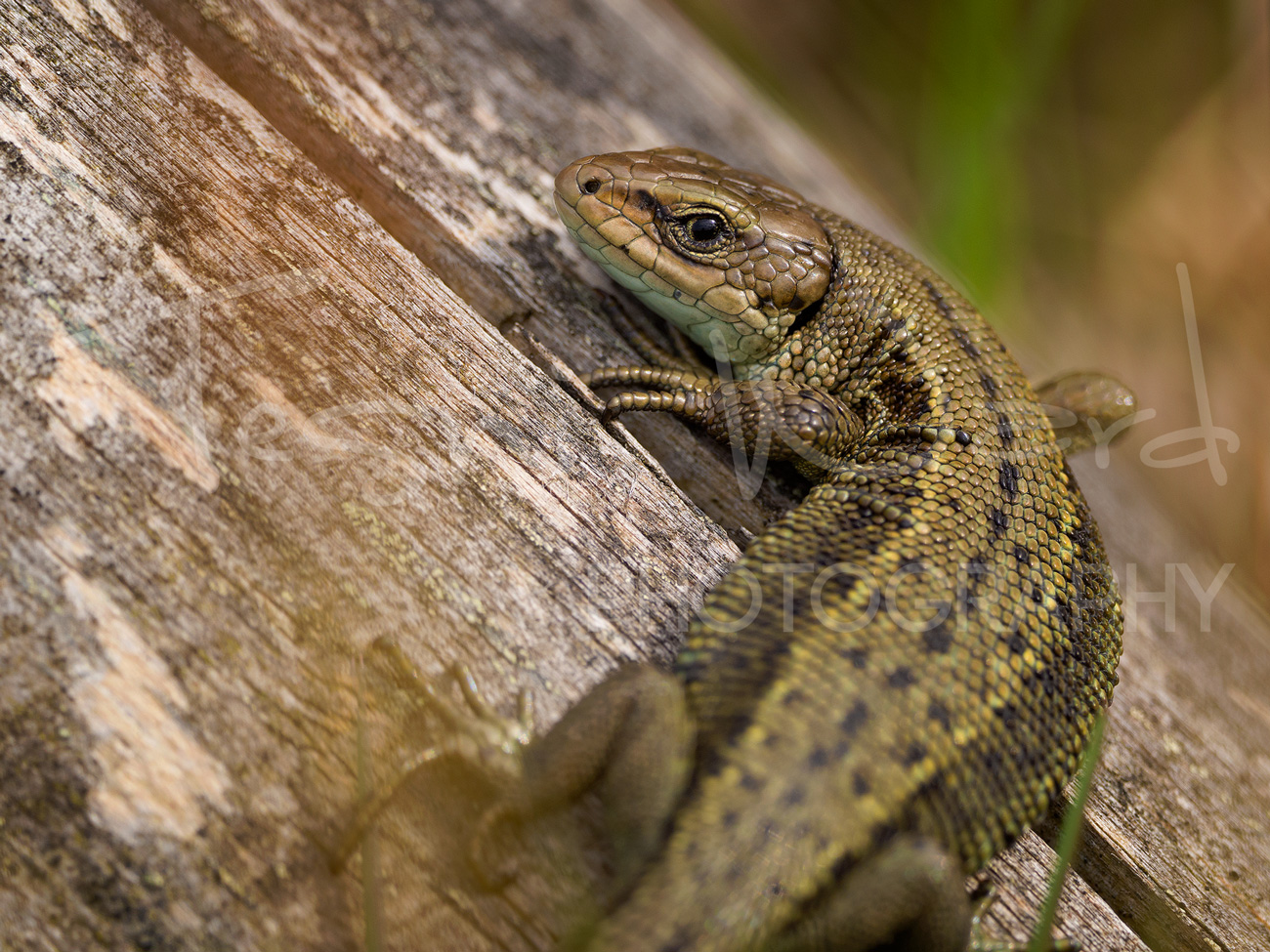 Olympus OMD EM1 MKII Review – A Wildlife Photographers Perspective