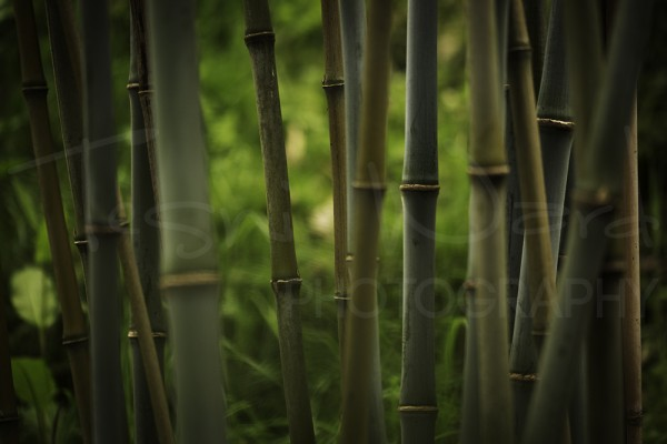 Bamboo Plant Macro Abstract Photography