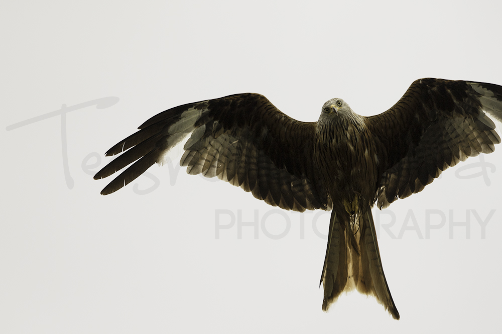 Red Kite Photography Workshops