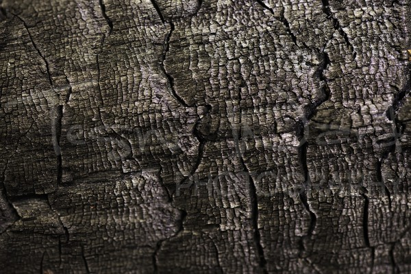 Wood Burnt Abstract Photography
