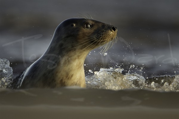 Grey Seal Photography Workshop