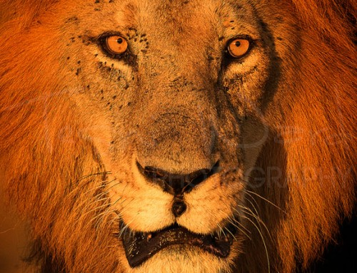 Photography Safari in Africa – Make the most of it!