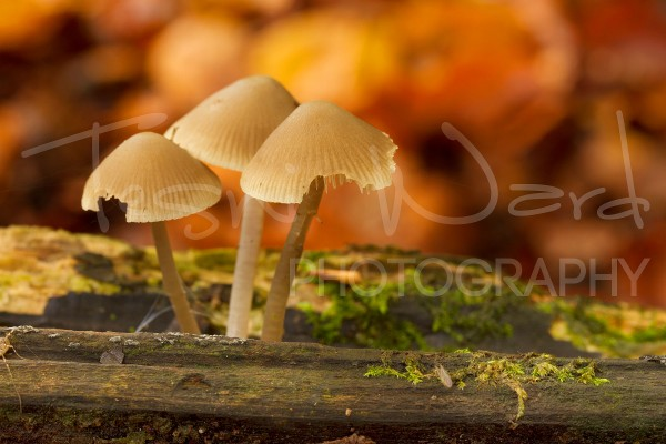 Mushroom Peak District Macro Photography