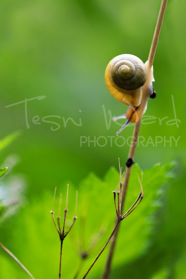 Snail Macro Photography Peak District