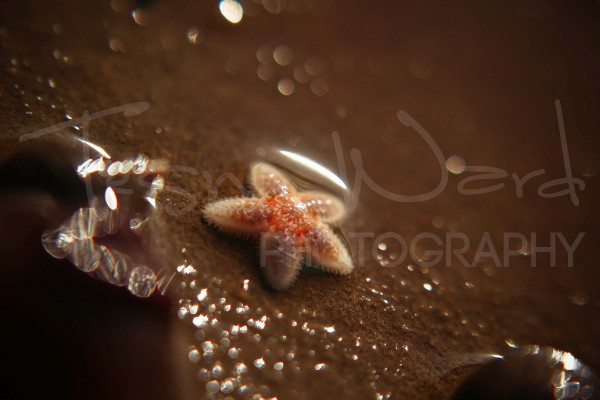 Starfish Baby Macro Photography