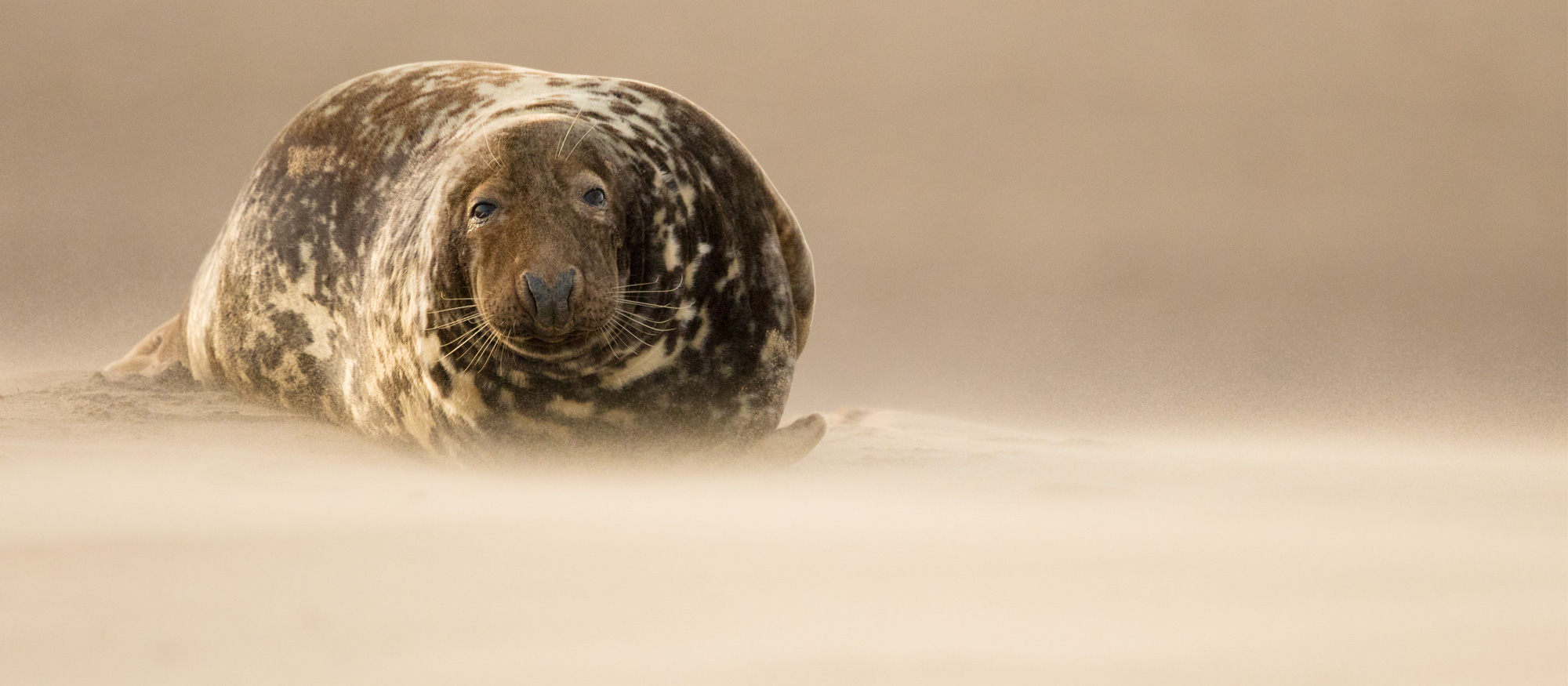 Grey Seal Photography Workshop Tour