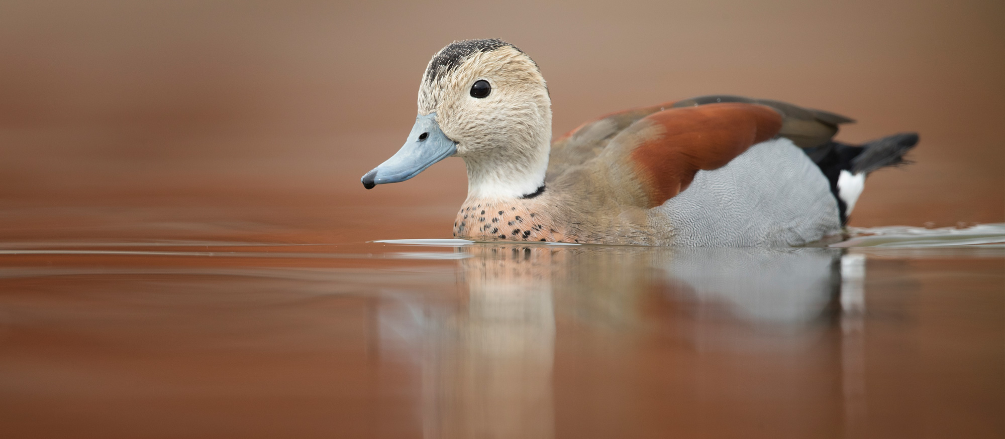 Waterfowl Photography Workshop