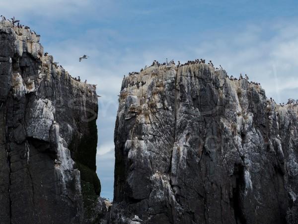 Coastal Bird Wildlife Photography Colony Northumberland