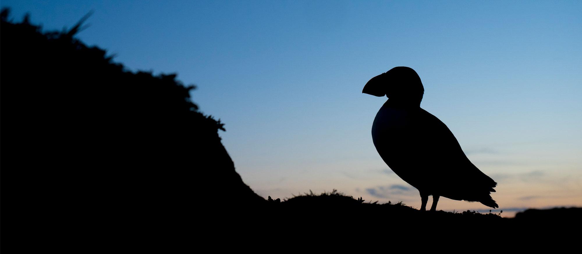 Skomer Photography Workshop Tour Overnight Puffins Wildlife